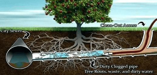 Can Tree Roots Cause Sewer Backup You Bet